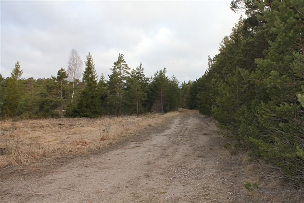 Infartsväg till skogen