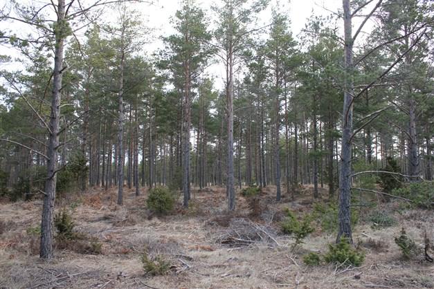 Ungskog intill vägen