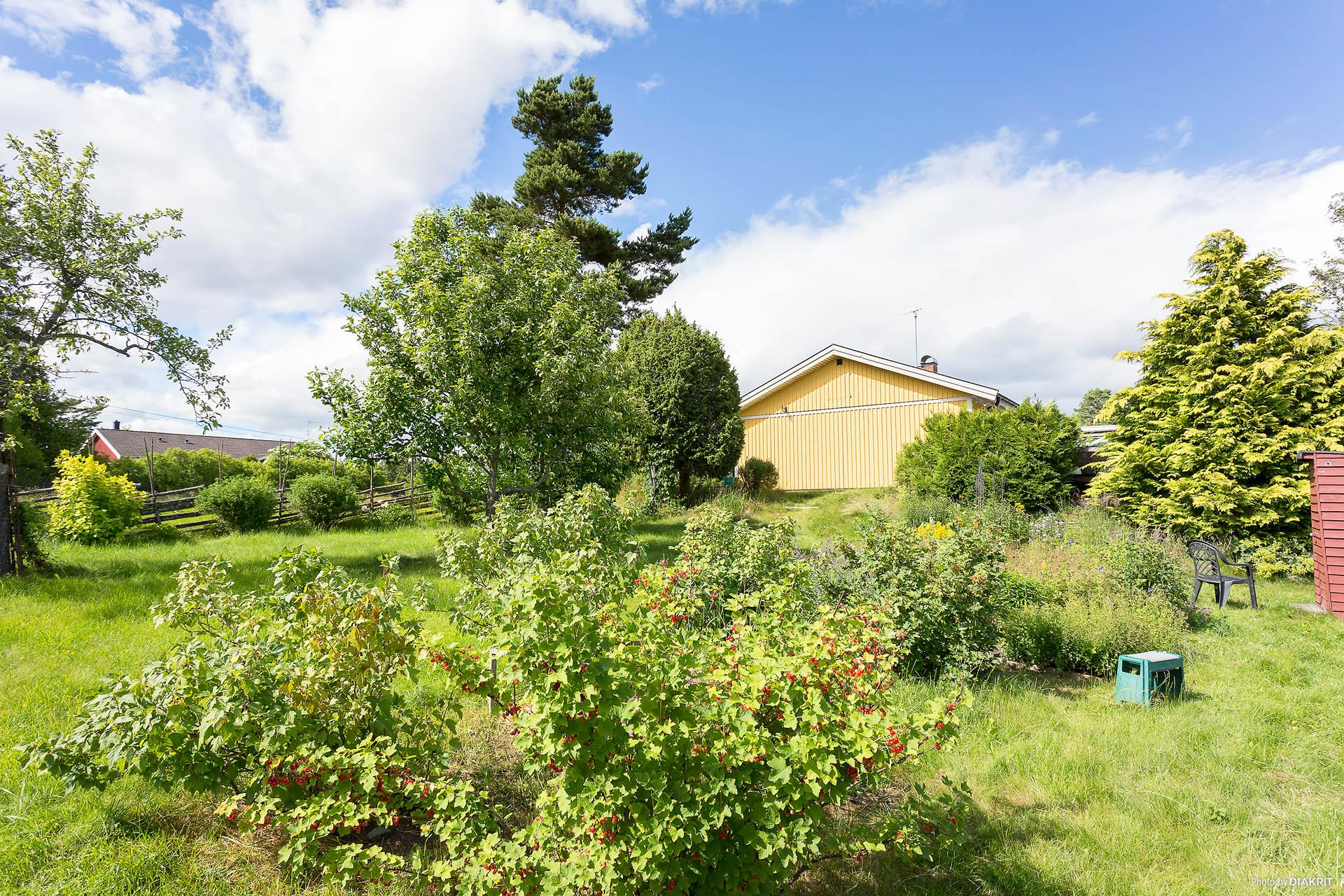 På tomten finns flera bärbuskar och frukträd