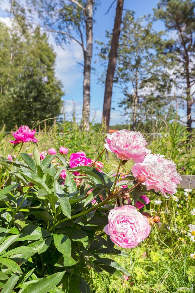 Stor härlig trädgårdstomt med vackra omgivningar