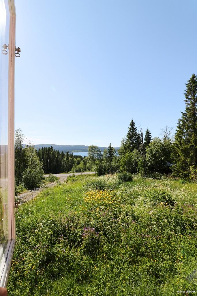 Utsikten från köksfönstret