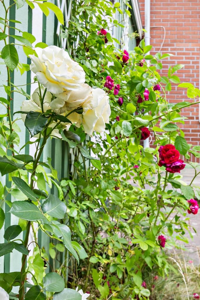 Baksida med uteplats och egen trädgård.