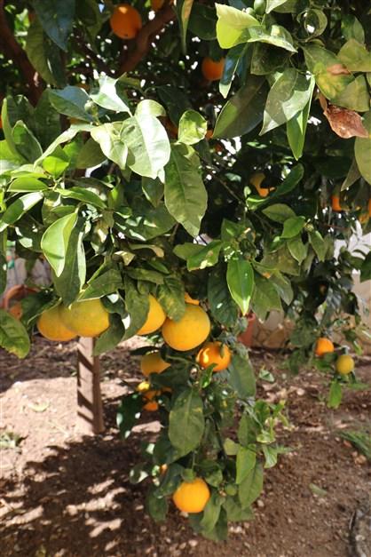...och mandariner
