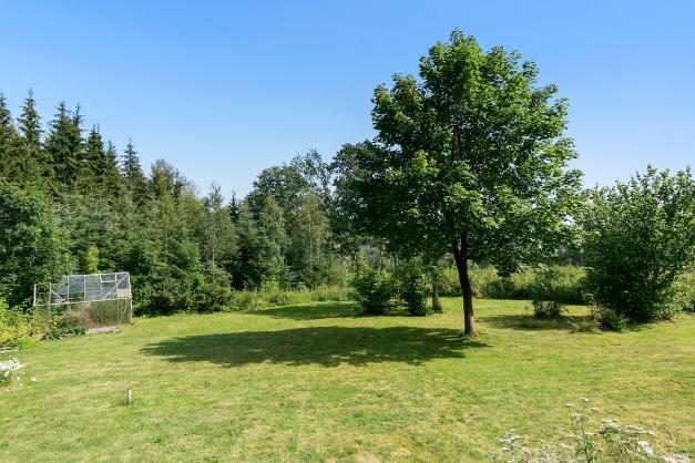 Trädgårdstomt med stor gräsmatta