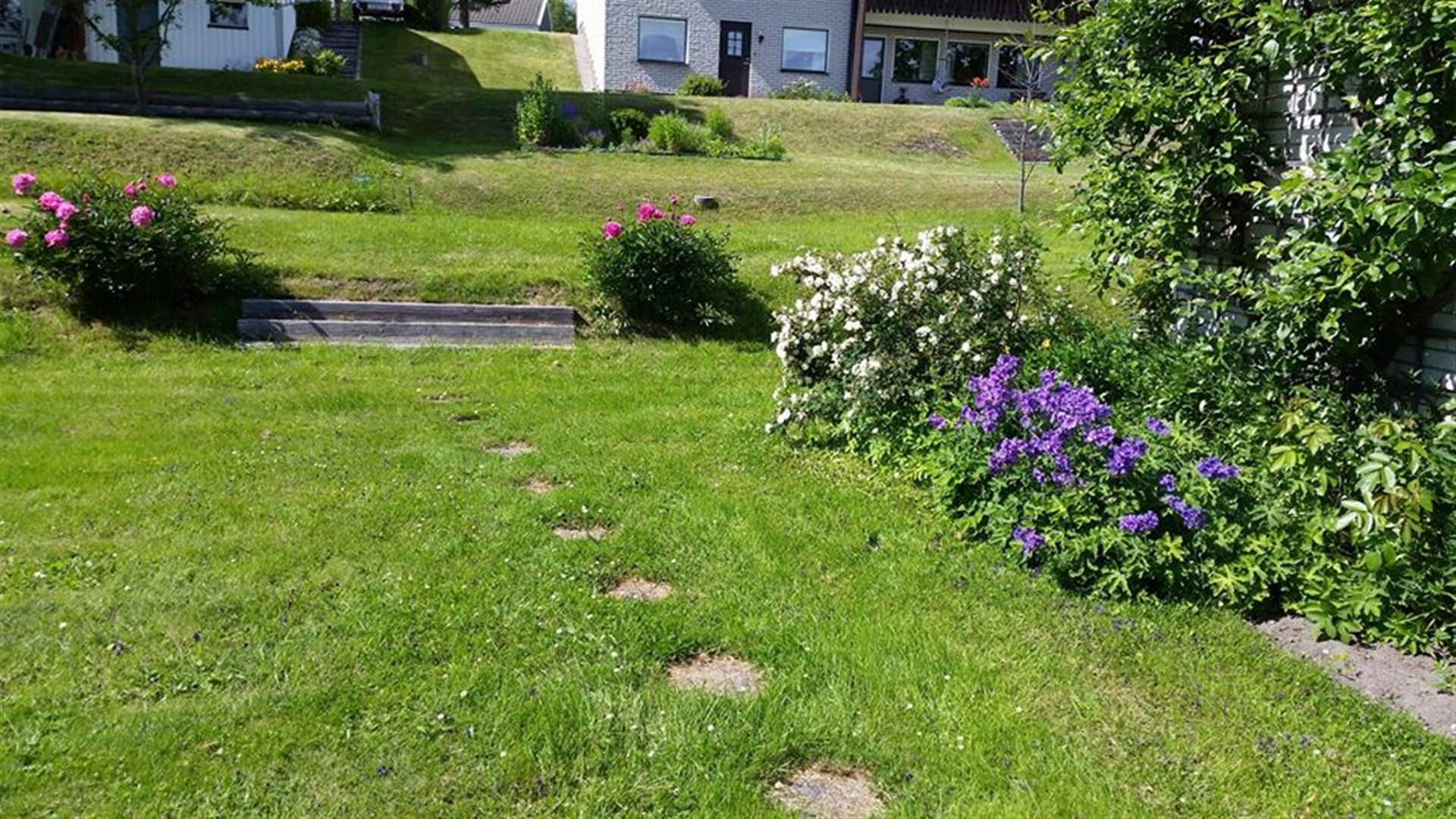 Rabatt med vita rosor och blå blommor, mot väggen Viktoria plommon i spaljé. Två Rosa Pion buskar på var sin sida om trapp på gårdsplanens baksida.
