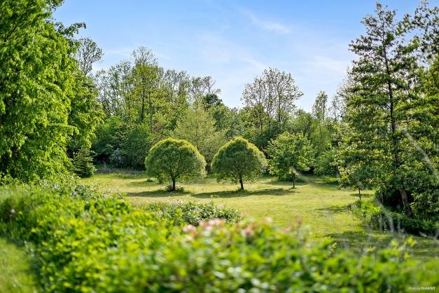 Parkliknande trädgård där all skön träd, buskar och perenner finner sin plats