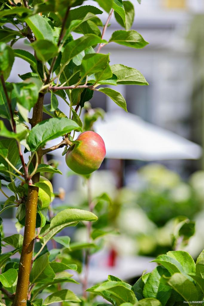 I den lagom stora trädgården finns det plats att odla mycket gott om man vill.