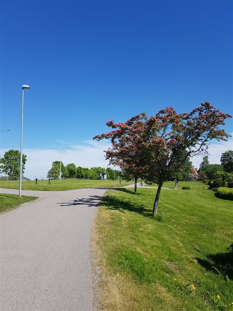 Busshållplats inom räckhåll