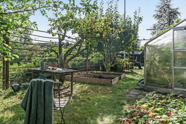 Äppelträd, växthus och pallkragar.