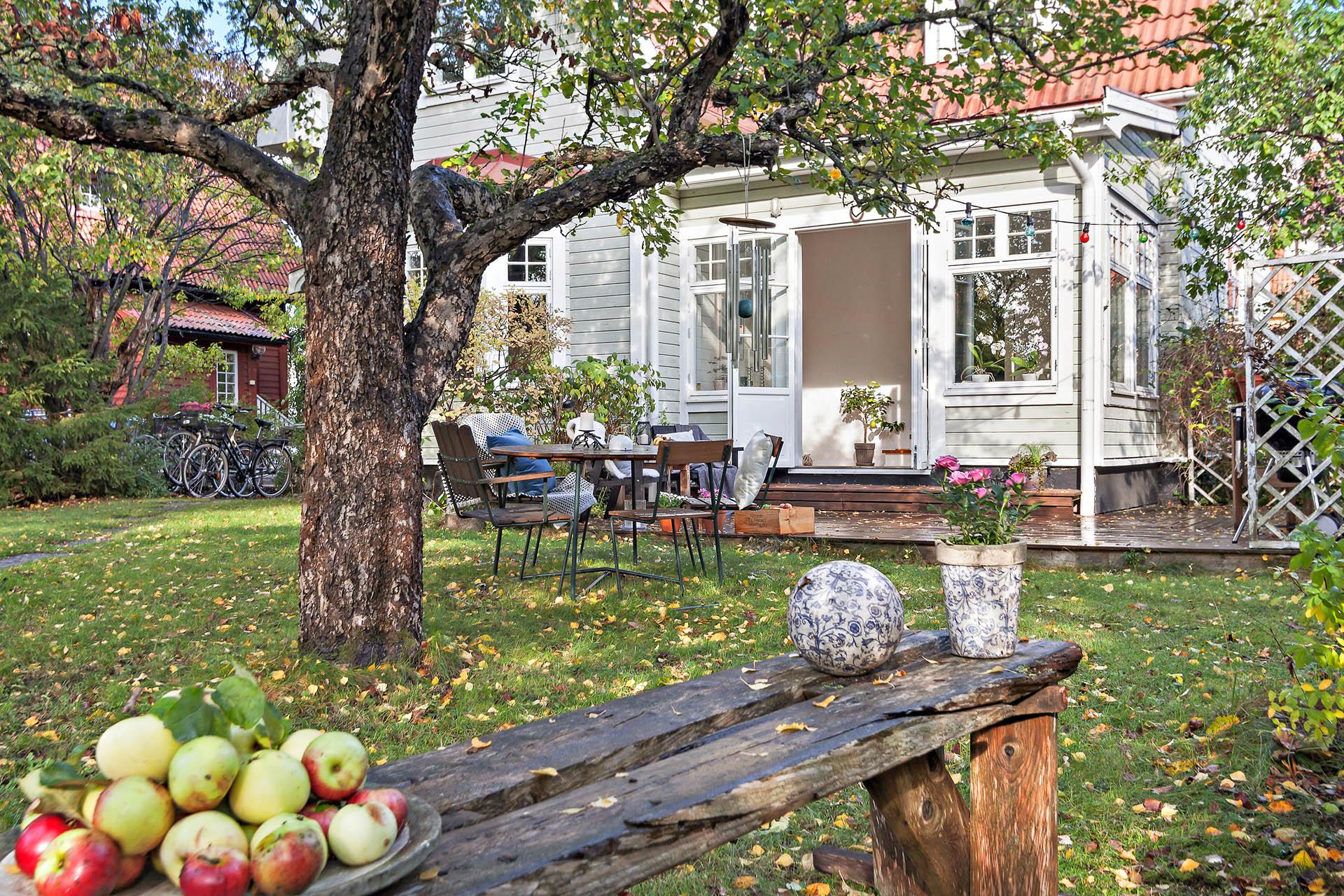 Njut av äpplen från den egna trädgården.