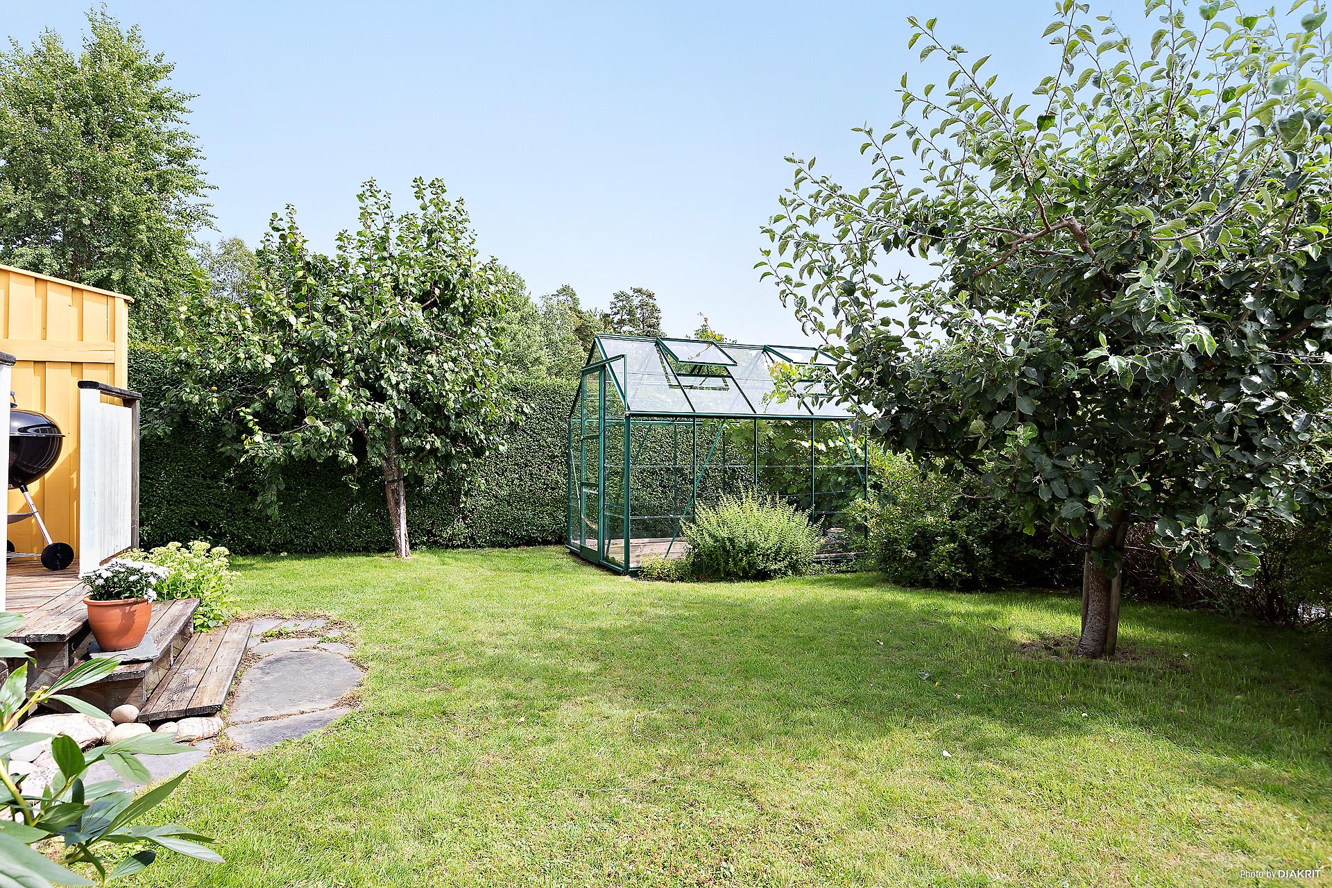 Trevlig trädgård med växthus, bärbuskar samt äpple- och plommonträd.