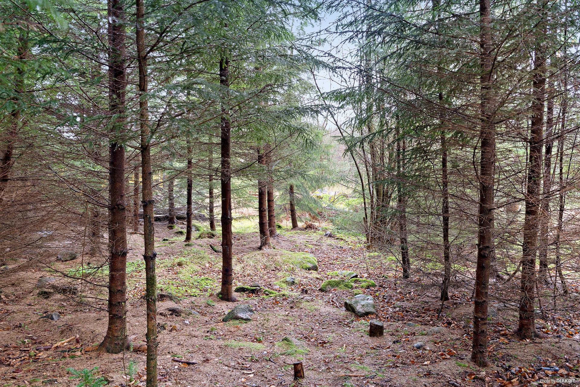 Runt husknuten finns ett fantastiskt skogslandskap.