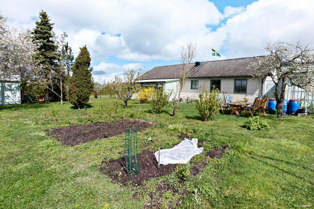 Trädgård med planteringar