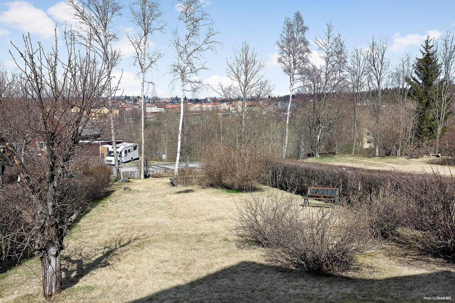 Trädgården på baksidan.