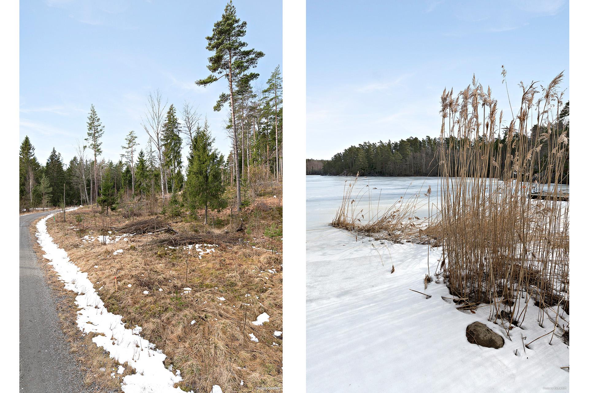 Skogsmiljö nära vatten