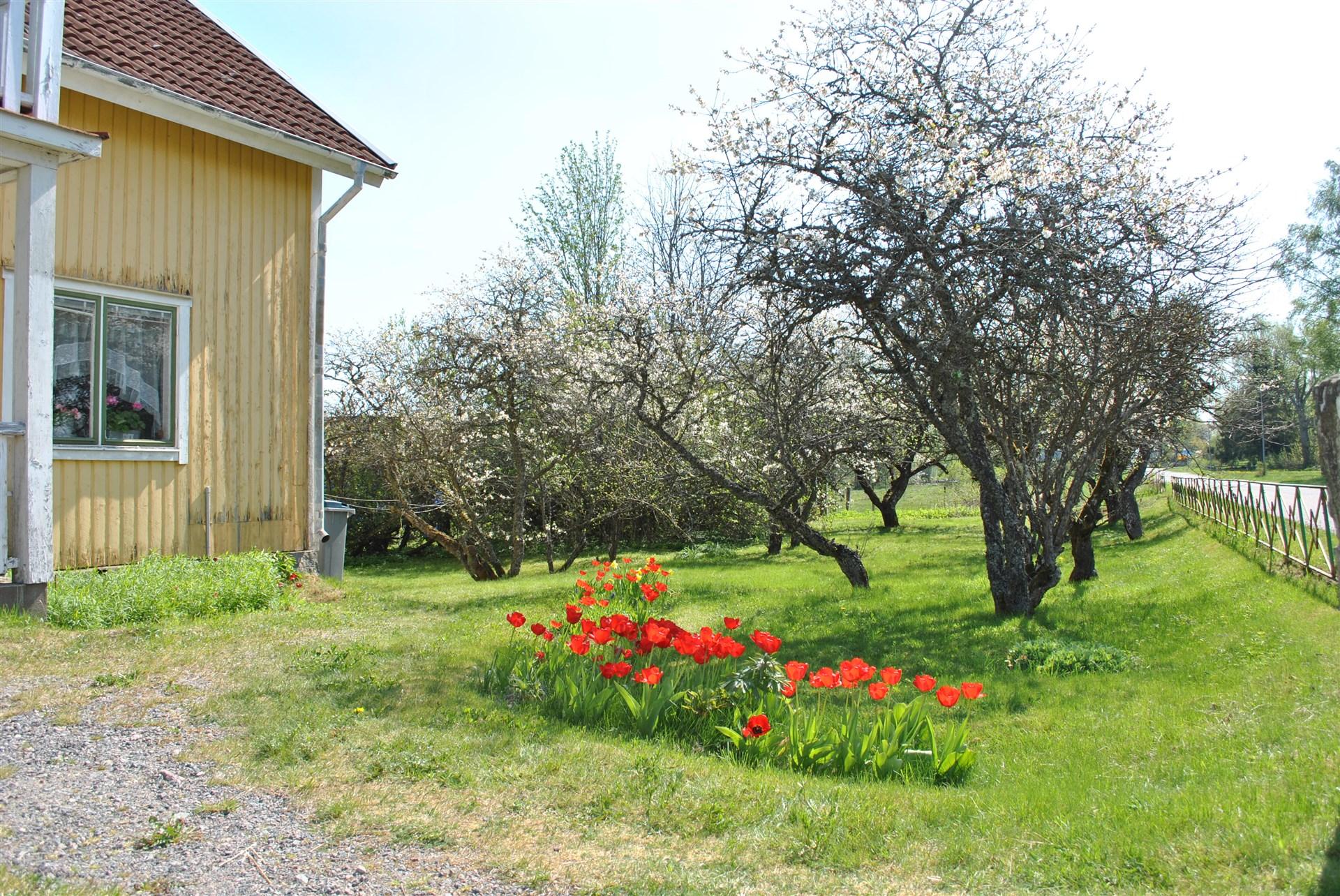 Träden blommar
