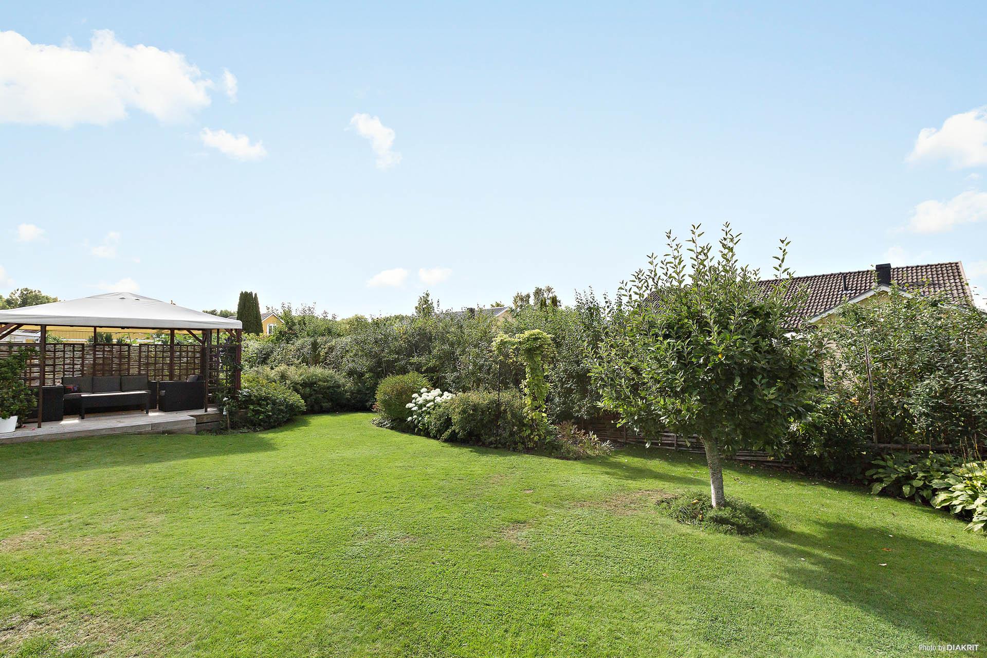Trädgård/baksidan