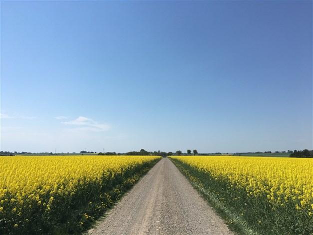 Grusvägen som leder till gården