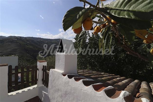 Flera fruktträd finns på tomten, t ex nisperos, fikon, apelsin och mandarin.