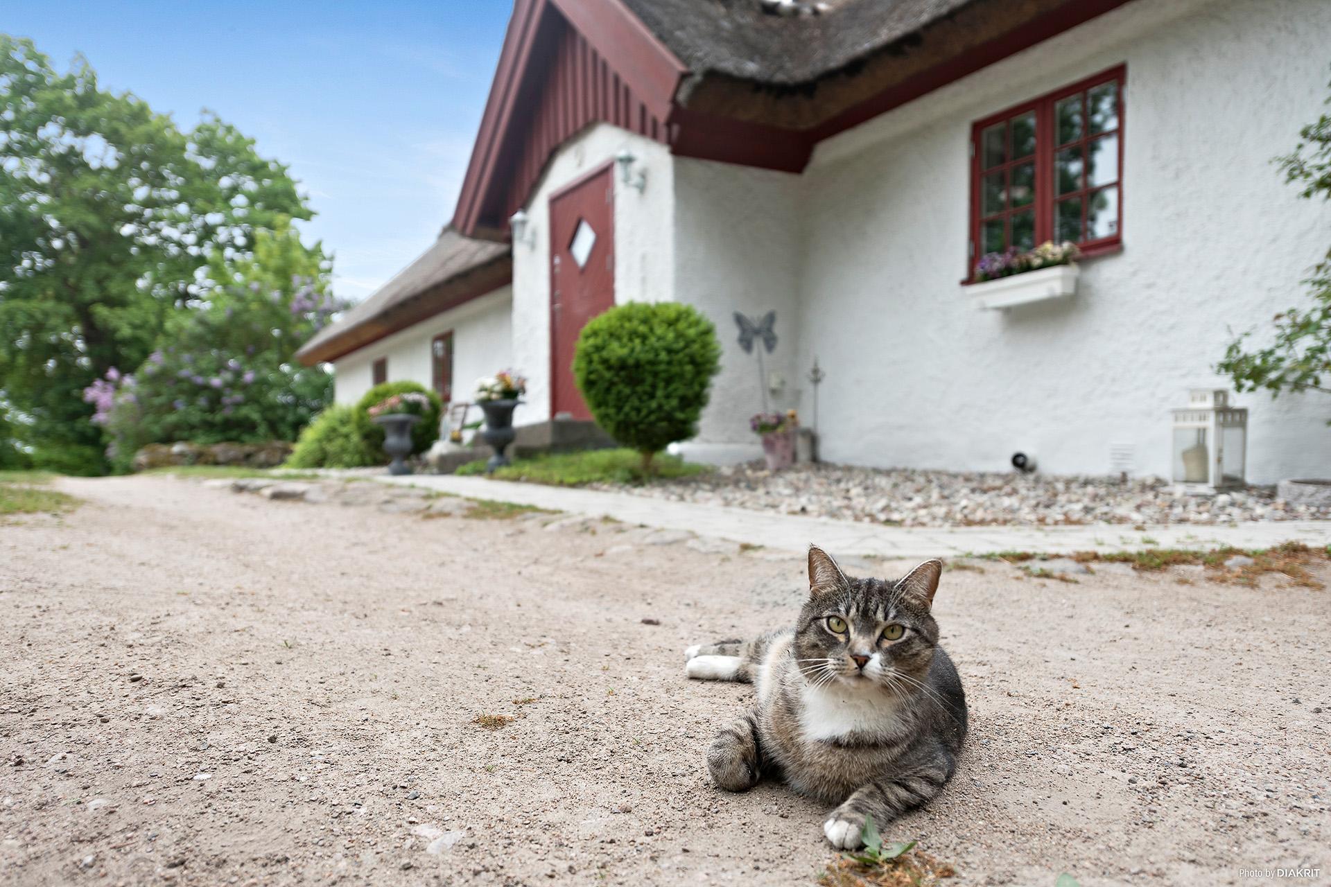 Vasstak, putsad fasad och fönster som smälter bra in. Pittoreskt! Lilla katten passar bra in.