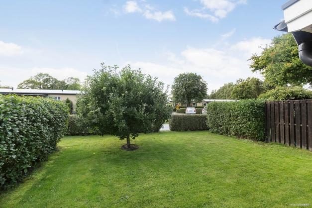 Trädgård med äppelträd