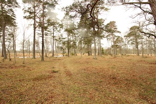 Ängsmark på Skifte 2