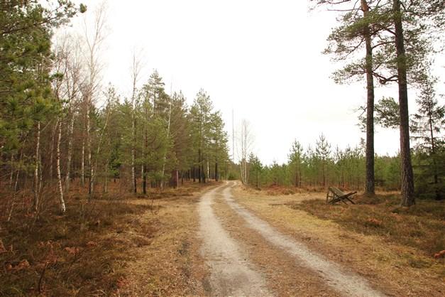 Tallskog på skifte 1
