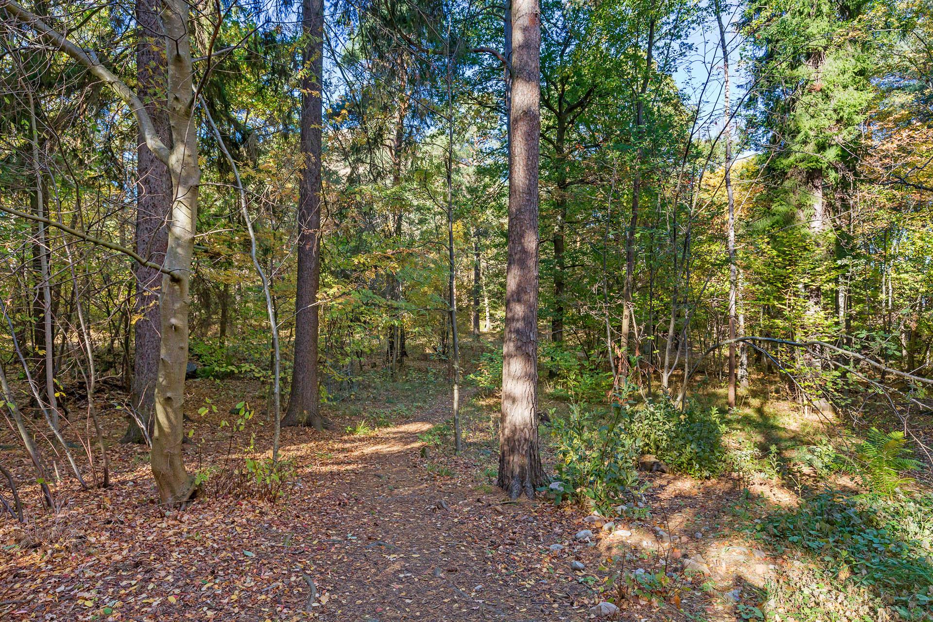 Lummig baksida med natursköna promenadstråk i Nackareservatet.