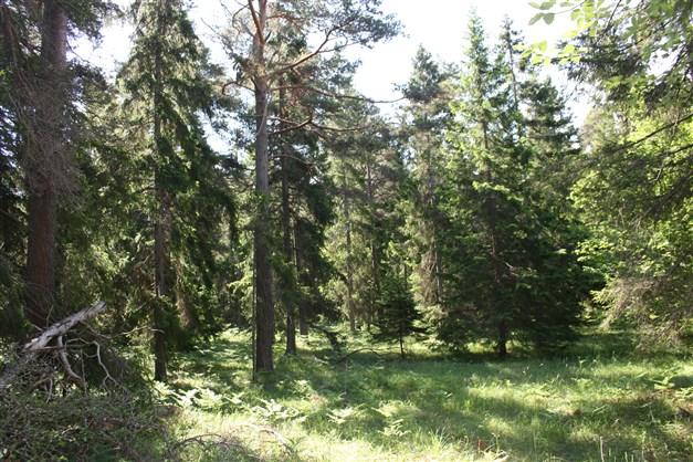 Skog i naturreservatet