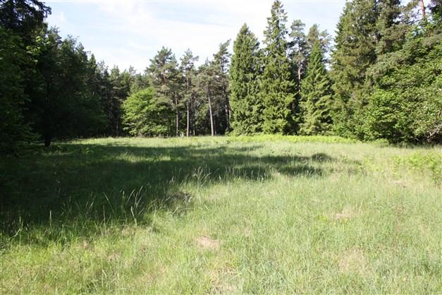 Gamla sågplatsen i södra delen av naturreservatet