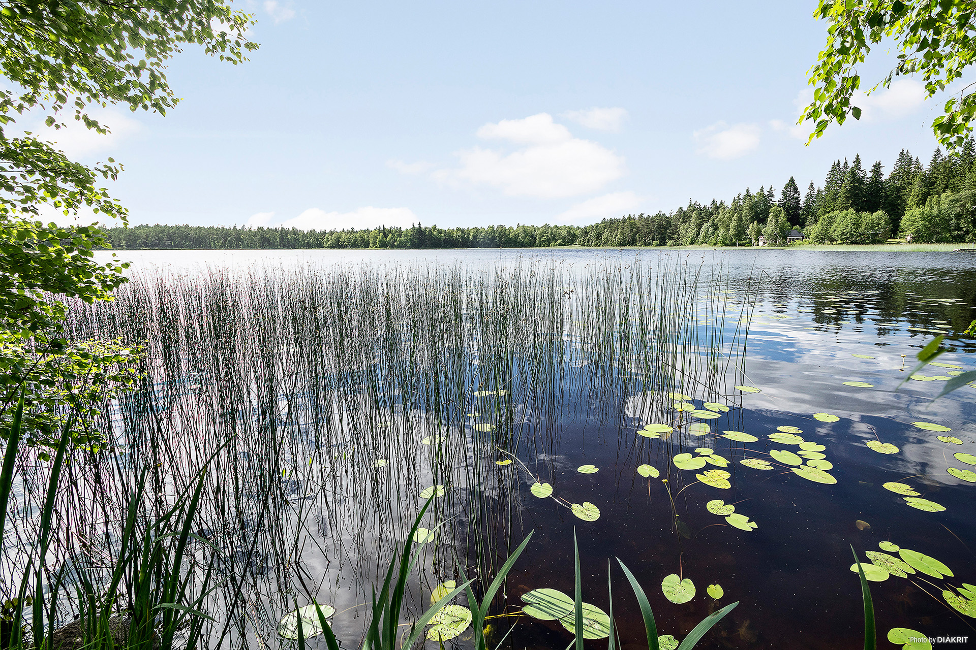 I vattenbrynet på Gamlarpasjön från den egna sjötomten