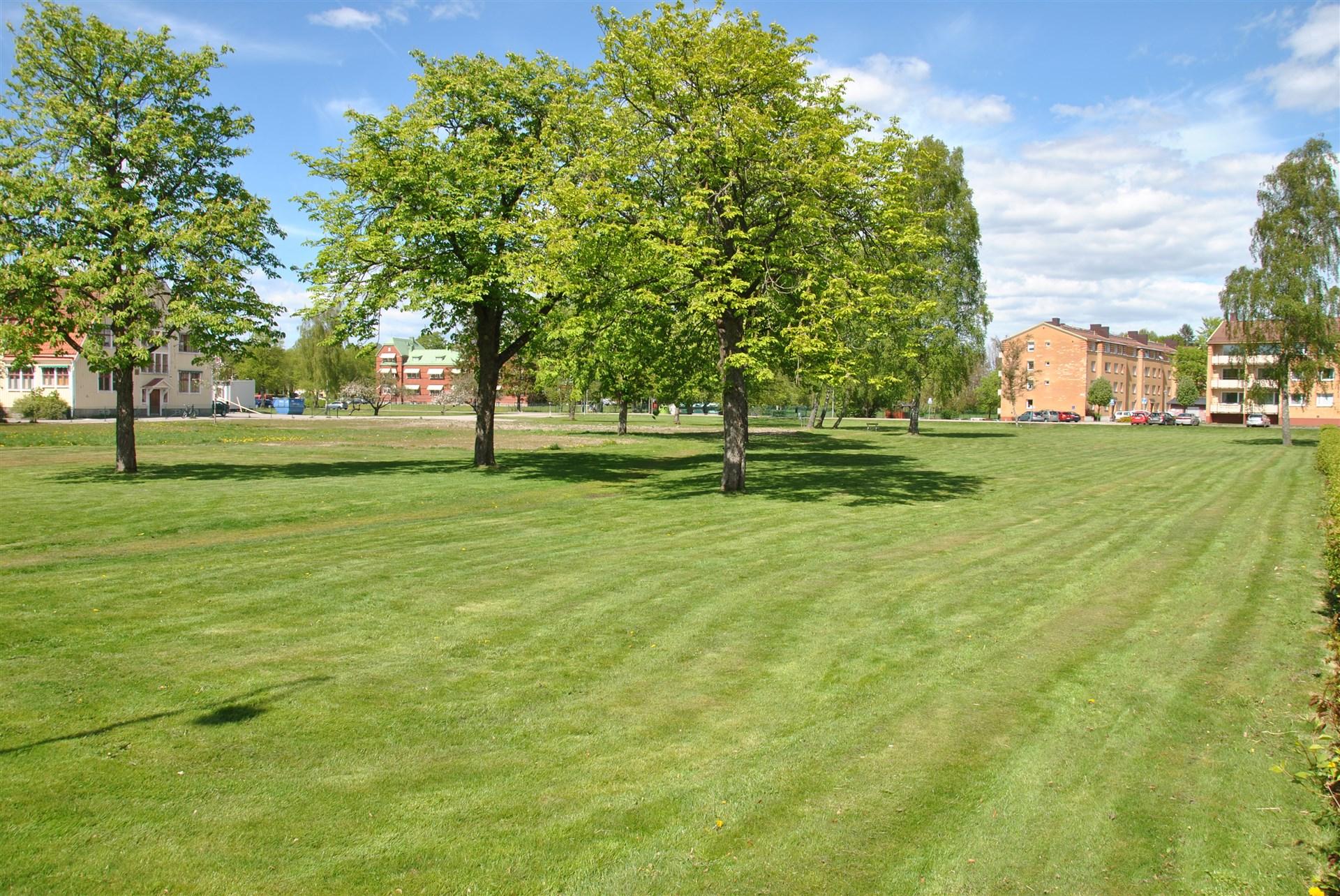 Sommarbild: områdesbild precis utanför lägenheten. Musikskolan i bakgrunden