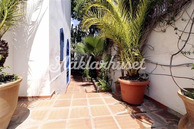 Lummig trädgård med palmer i stora krukor