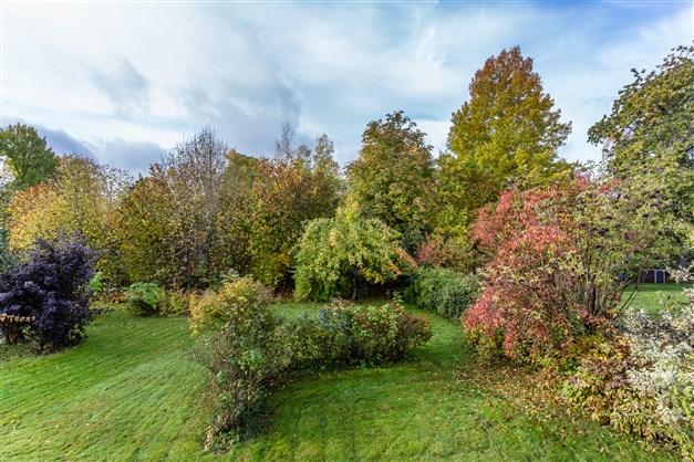 Fin uppväxt trädgård med träd och buskar