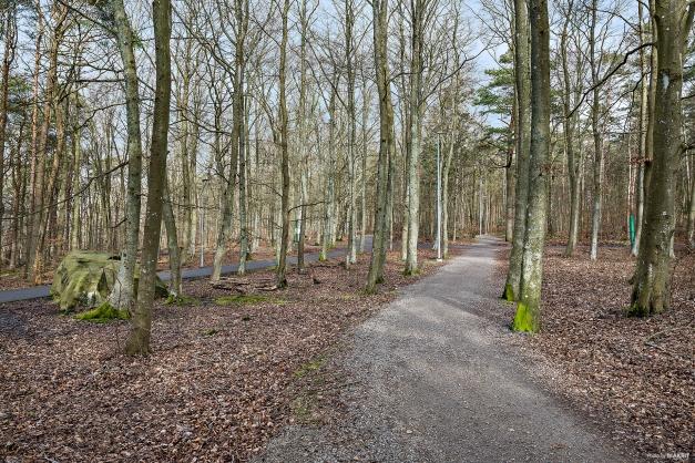Påskbergsskogen erbjuder härlig motionsslinga.
