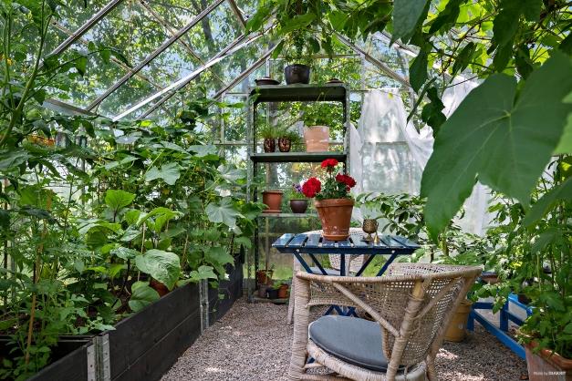 Välfyllt växthus med både tomater, vinrankor, gurka, aubergine mm