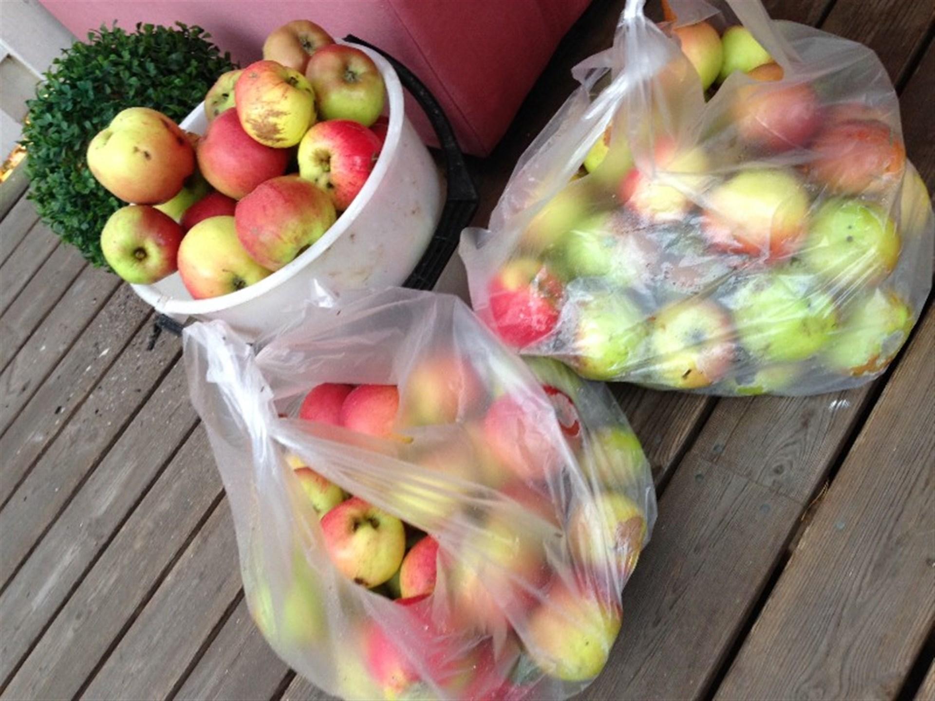 Säljares bild från egen äppleskörd