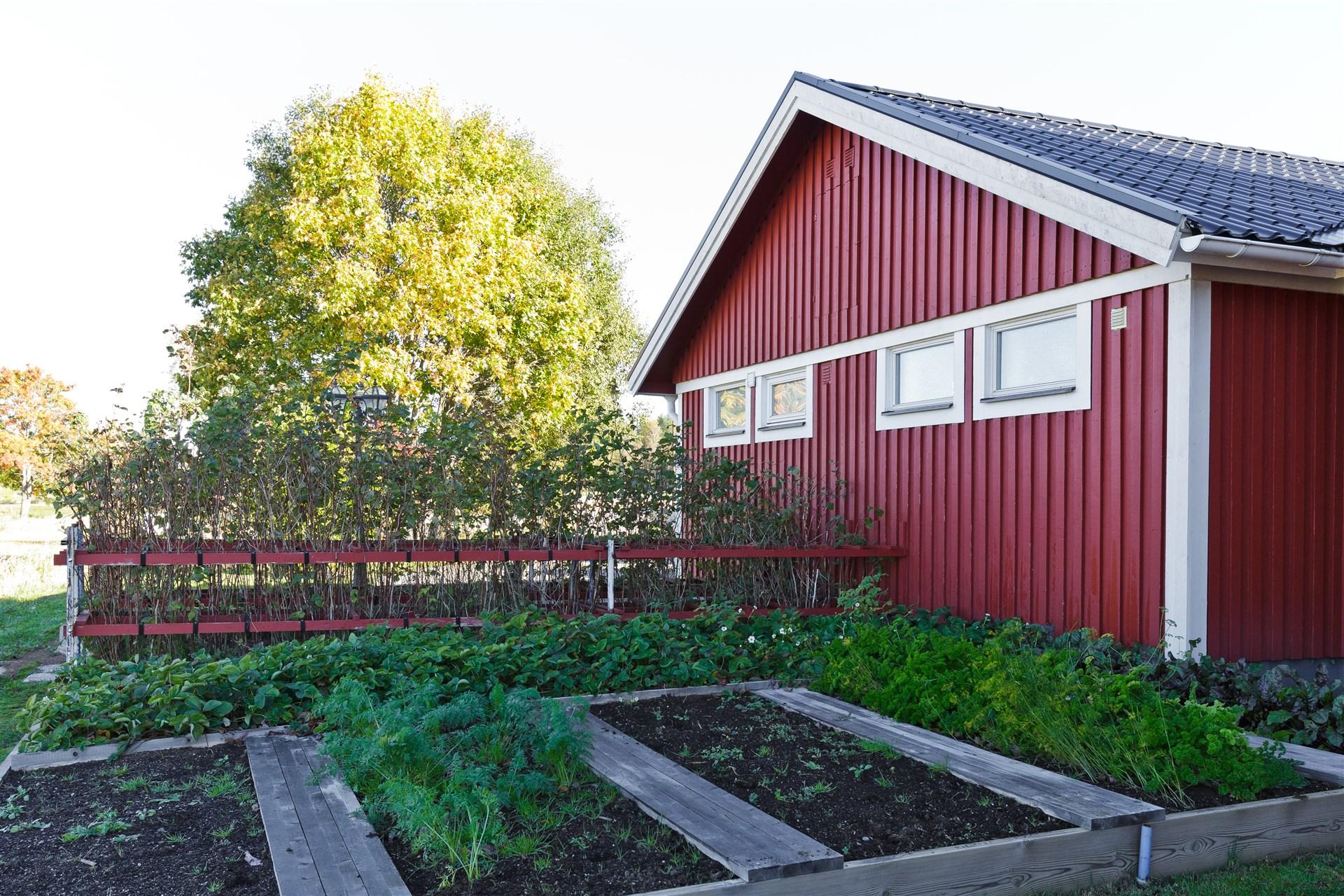 Odlingsmöjligheter i bla pallkragar och växthus