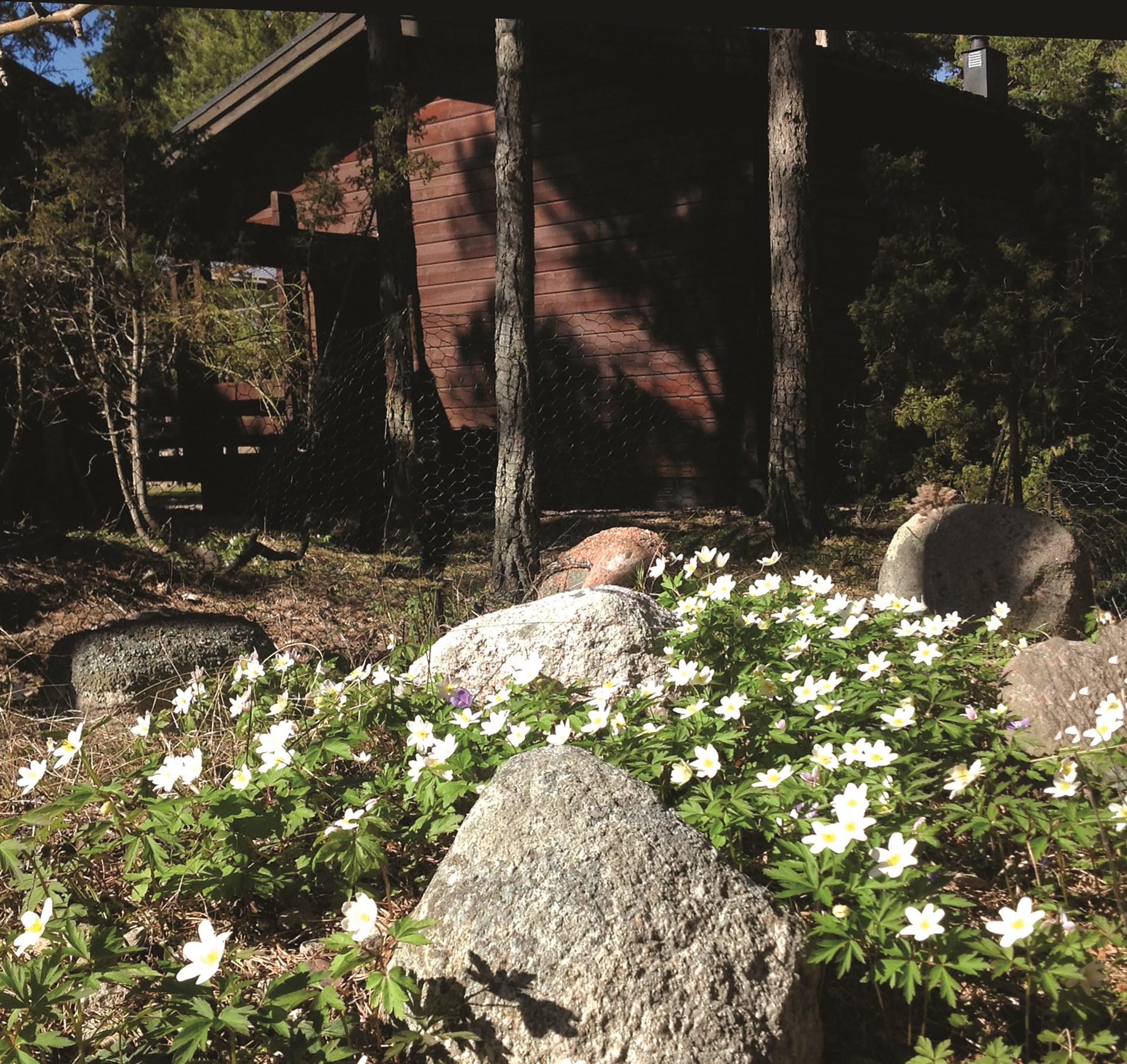 Här växer dom vackraste blomster inpå husknuten