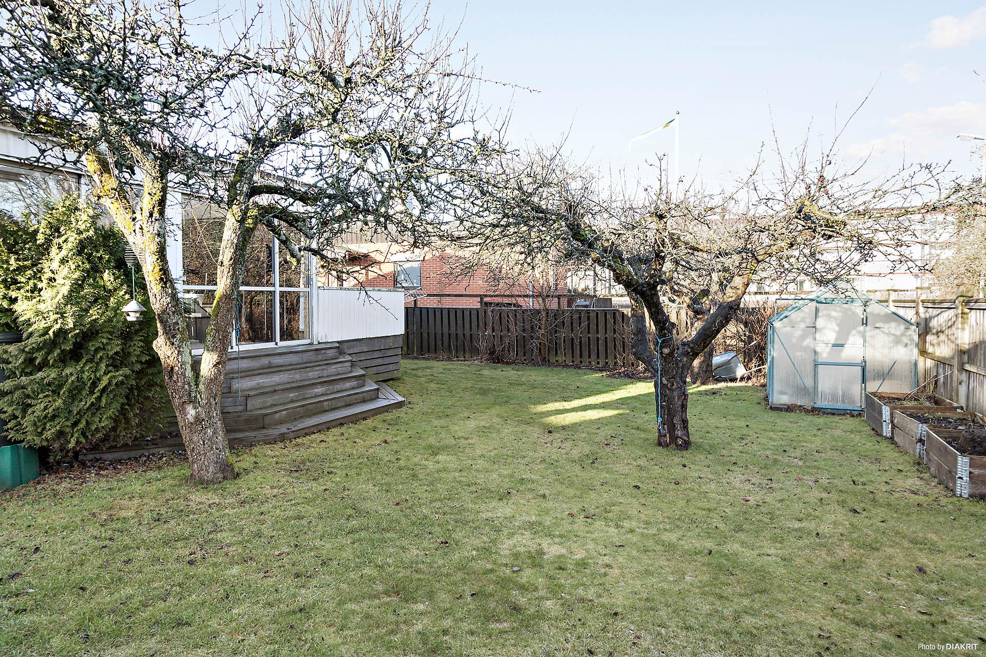 Trädgård med fruktträd.