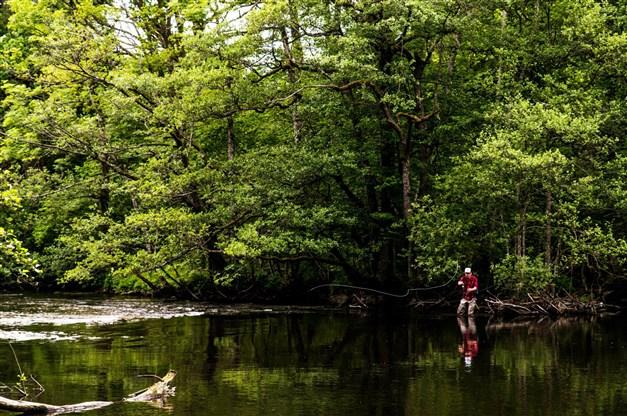 Säveåns natur och fiske