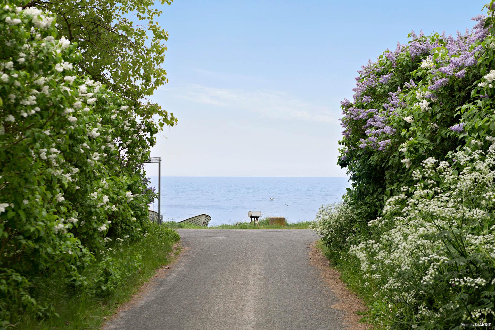 Vägen ner till havet