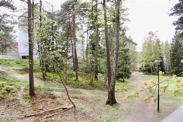 Skogen ett stenkast från huset...