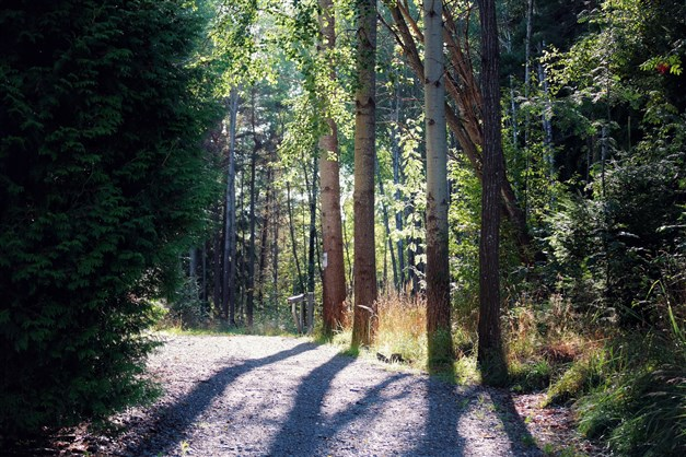 Majroskogen ligger mellan Svedmyra och Gubbängen
