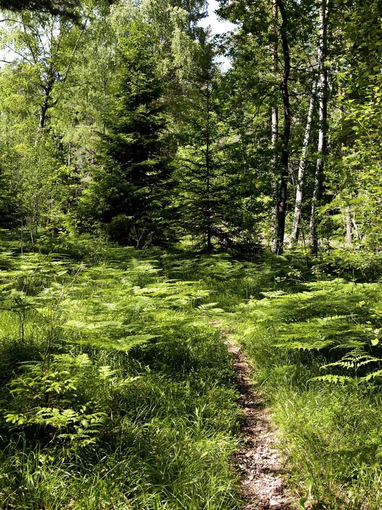 Direkt utanför dörren breder Orlångens Naturreservat ut sig.