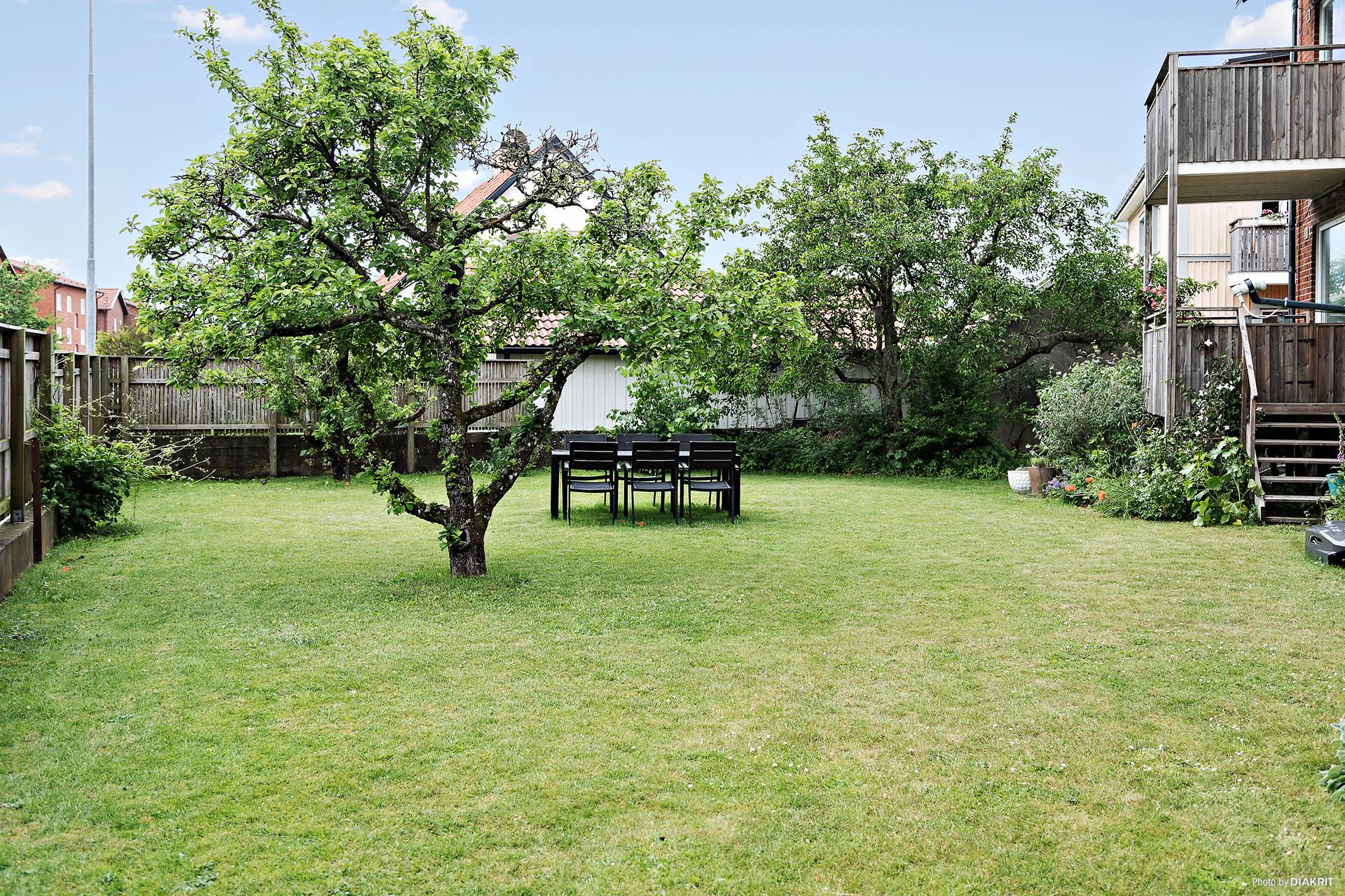 Stor gemensam trädgård där barfota fötter kan springa av sig.