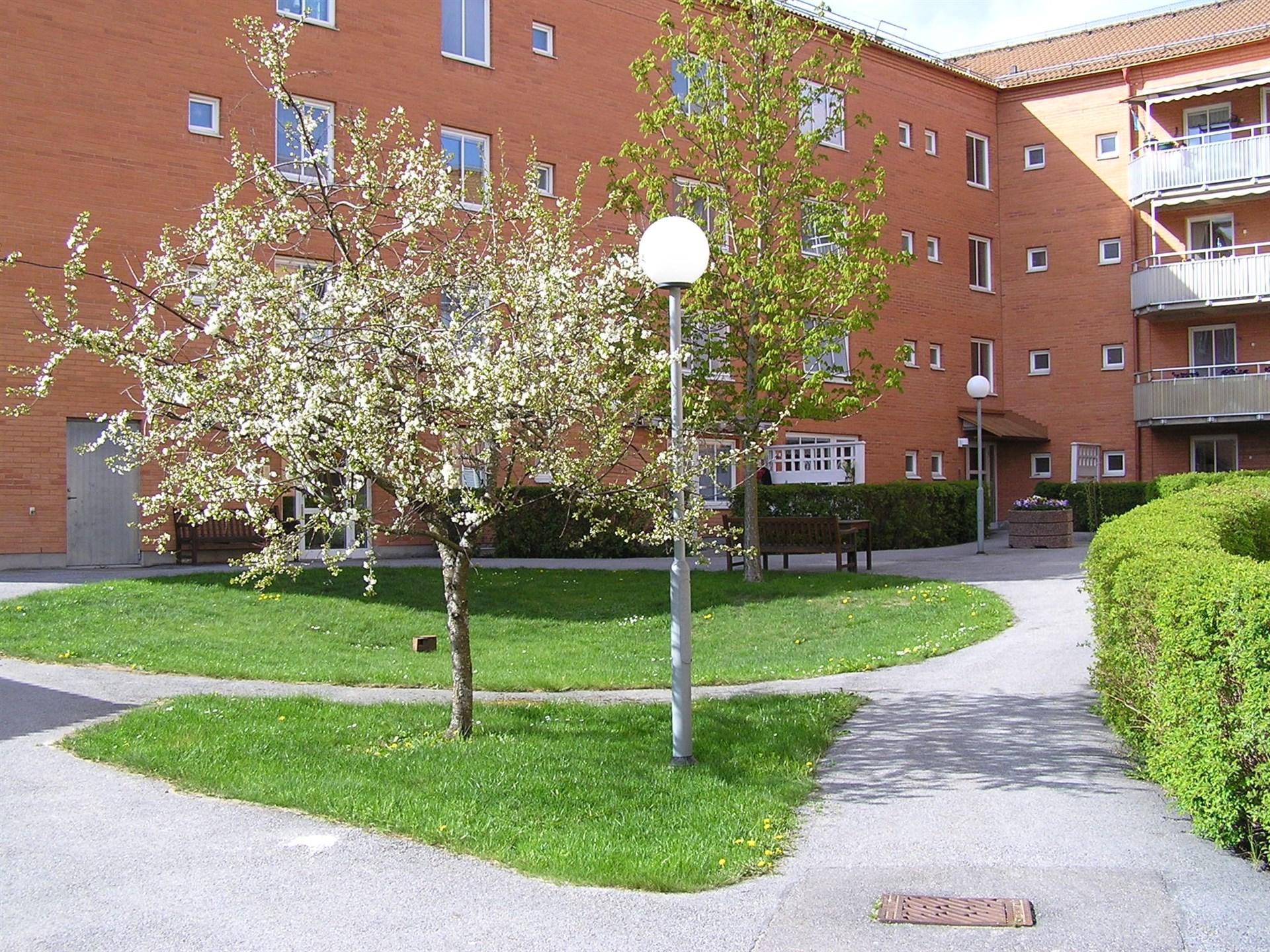 Vårbild - innergården