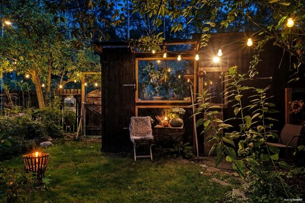 Växthus och kvällsmyset är totalt