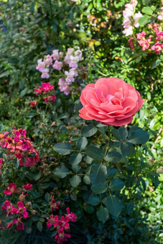 I trädgården finns mängder av vackra blommor/växter att njuta av.