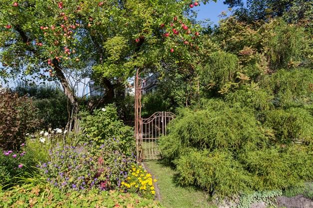 Trädgården har flera rum/avdelningar att njuta av.